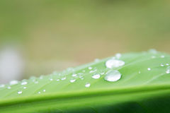 Water drops on leaf in garden Royalty Free Stock Photography