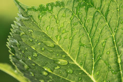 Water drops on leaf Stock Photography
