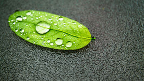 Water drops on leaf. Laying on glass surface Royalty Free Stock Photos