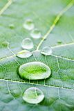 Water drops on leaf macro royalty free stock photography