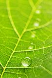 Water drops on leaf macro Stock Image