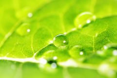 Water drops on leaf macro Stock Images