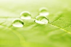 Water drops on leaf macro. Water drops on green fresh leaf macro Stock Photos