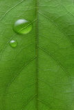 Water drops on leaf stock image