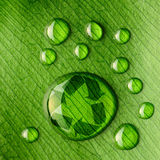 Water drops on leaf and recycle logo. Beautiful water drops on a leaf close-up and recycle logo Stock Image