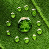 Water drops on leaf and recycle logo. Beautiful water drops on a leaf close-up and recycle logo Royalty Free Stock Photos