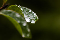 Water drops on leaf. Water drops on a leaf with the sun lighting them up Stock Image
