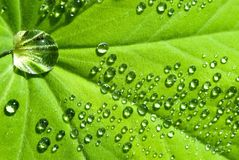 Water drops on the leafs stock images