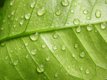 Water drops on a leave stock photography