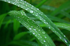 Water drops on leaves Stock Images