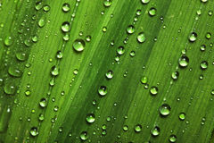 Water drops on leaves royalty free stock images