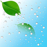 Water drops on the leaves. And blue background Royalty Free Stock Photo