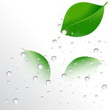 Water drops on the leaves Stock Photos
