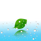 Water drops on the leaves. And blue background Royalty Free Stock Photos