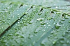 Water Drops Leaves. Water drops on fresh green leaf. Beautiful morning dew image stock photos