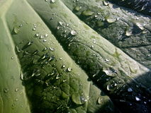 Water drops. On leaves glazing in sunlight stock image