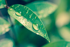 Water drops on leaves Stock Image