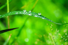 Water drops on leaves Stock Photography