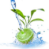 Water drops on lime Stock Image