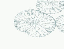 Water drops on lotus leaf. Water drops on lotus leaf , sketch vector Stock Image