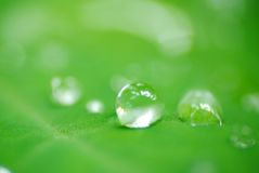 Water drops macro royalty free stock photography