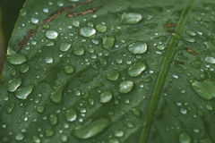 Water drops. Morning water drops on leaf Stock Image