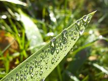 Water drops in nature Royalty Free Stock Image