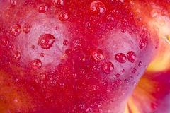 Water drops on nectarine fruit background Stock Images