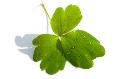 Free Water Drops On Plant Leaf Stock Photo - 10509000