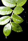Water Drops On Plant Leaf Stock Photography