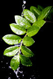 Water Drops On Plant Leaf Royalty Free Stock Photo