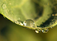 Water drops on plant. Water droplets of plant in the autumn Royalty Free Stock Photography