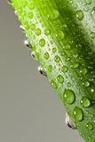 Water drops on plant Royalty Free Stock Photography