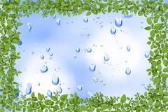 Water drops and plant frame Royalty Free Stock Photo