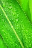 Water drops on plant leaf Stock Images