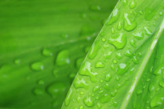 Water drops on plant leaf. In the garden royalty free stock image