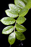 Water Drops on  Plant Leaf Stock Photos
