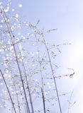 Water drops on plant stems. Royalty Free Stock Photography