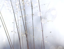 Water drops on plant stems. Royalty Free Stock Photos