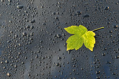 Water Drops on Polished black Car paint with Leaf Royalty Free Stock Images