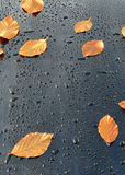 Water Drops on Polished black Car paint with Leafs Stock Photography