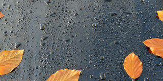 Water Drops on Polished black Car paint with Leafs Stock Photos