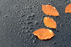 Water Drops on Polished black Car paint with Leafs Royalty Free Stock Images