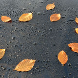 Water Drops on Polished black Car paint with Leafs Royalty Free Stock Image