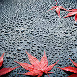 Water drops on polished black car paint with red leafs Royalty Free Stock Images