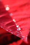 Water drops on red poinsettia. Close up of water drops on red poinsettia leaf Royalty Free Stock Photos