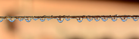 Water drops with reflection Stock Images