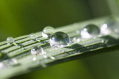 Water drops on the rice leaf Stock Photos