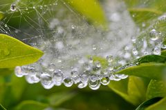 Water drops at spider net Stock Photography