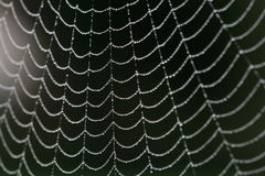 Water drops on spider's web Stock Image